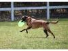 arti-frisbee